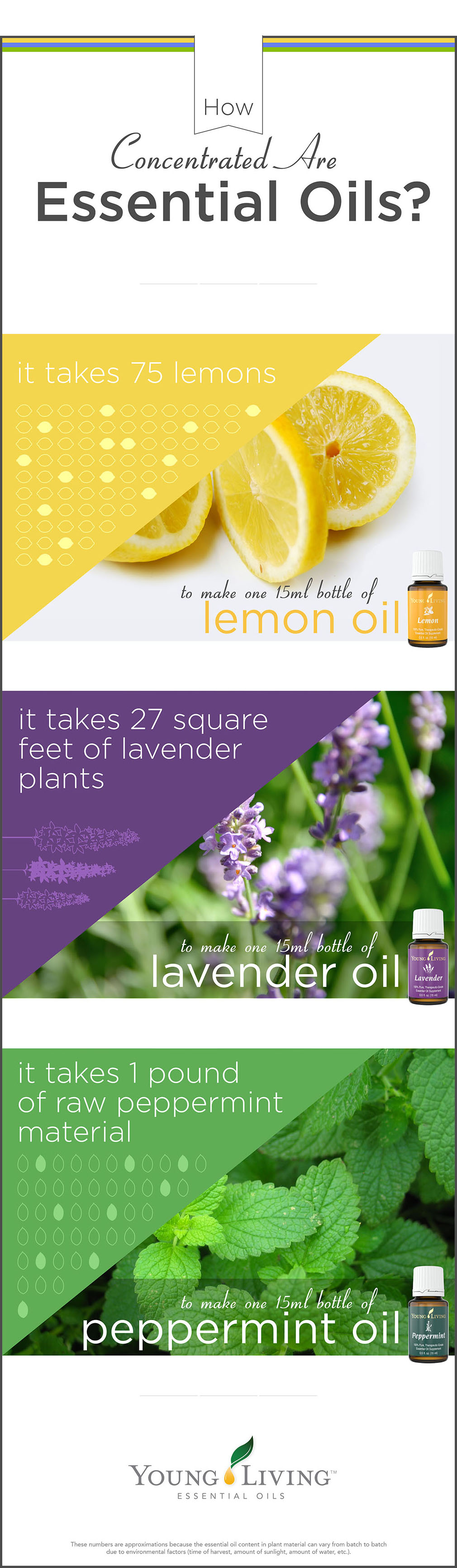 Young living essential oils ingredients